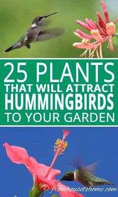 Plants: Of The Best Flowers That Attract Hummingbirds These hummingbird plants are the best bushes, perennials, annuals and vines for your hanging baskets and hummingbird garden. There are flowers for every type of front and backyard - sun, shade, drou Diy Garden, Shade Garden, Garden Projects, Garden Ideas, Backyard Shade, Backyard Birds, Backyard Plants, Garden Types, Garden Inspiration