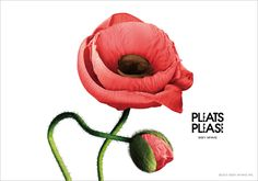 PL_Flower_2014may_05.jpg