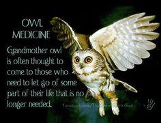 Owl Medicine  *~<3*Jo*<3~*