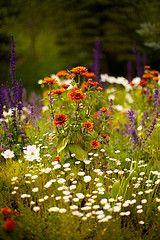Aspen Wildflowers-RM