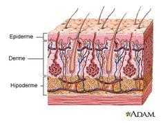 Como os ativos cosméticos penetram em nossa pele?