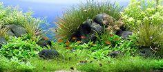 Aquarium Aquascape Holland 1 - Kooyman by Chris Lukhaup