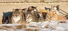 October 16th is Feral Cat Day - If the internet is any judge, everyone loves a cat, well… Unless it's a stray cat, at which point the tropes involve more back-alley caterwauling and boots being thrown at yowling cats on fences. Feral Cat Day is here to remind us of our love of the furry-little devils, and how every stray cat has within them a loving cuddle-able furball looking for a foreverhome.