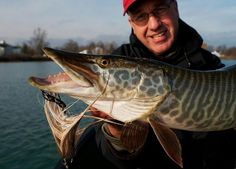While musky season is closed in many areas some guys are still out on the water…