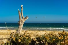 Tavira, uno de los pueblos más pintorescos y auténticos del #Algarve | Via Condé Nast Traveler España | 28/08/2017 Tampoco puedes dejar de recorrer los alrededores: ve a Santa Luzia a comer su famosérrimo pulpo (por ejemplo, en el Restaurante Polvo & Companhia) y a Cacela Velha, un precioso y diminuto pueblo, a visitar una playa, Fábrica, para quitarse la pamela. En su restaurante podrás comer (muy bien) un arroz caldoso, unas sardinhas o la captura del día. #Portugall