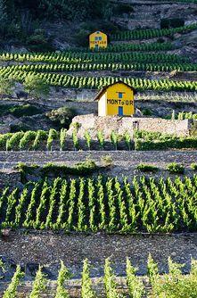 Le Fendant, le vin du Valais par excellence