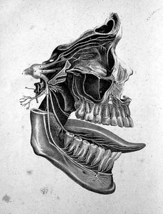 The Anatomy, Physiology, and Pathology of the Human Teeth, by Paul B. Goddard, 1844.