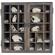 Curiosity Cabinet- Skulls