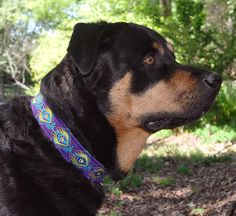 "Zander wearing Pet Necklace ""The Peacock"" Design Dog Collar in Purple suede with multiple thread colors."