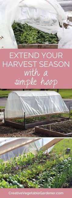 You can extend your harvest into winter by building a simple cover for your raised beds.