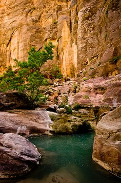 Scenery from The Narrows hike at Zion National Park, Utah. Definitely one o our favorite National Park in the U. Narrows Zion National Park, Hiking The Narrows, Places To Travel, Places To See, Travel Destinations, Utah Parks, Vacation Spots, Beautiful Places, Amazing Places