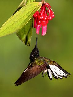 Colorful Birds -Hummingbird - They're so little but so full of energy.