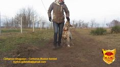 Cimarron Uruguayo - Cerberus Illusion Except of breeding Cimarron Uruguayo dogs in FCI register kennel Cerberus Illusion, we also train our dogs and puppies . Beowulf, 7 Month Olds, Cerberus, 7 Months, Dog Training, Videos, Illusions, Dogs And Puppies, Dog Lovers
