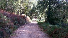 Paisaje senda del río Troncoso Sidewalk, Country Roads, Scenery, Fotografia, Side Walkway, Walkway, Walkways, Pavement