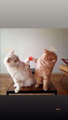 New pet photography cat animals 33 ideas Cute Cats And Kittens, I Love Cats, Kittens Cutest, Cute Cat Memes, Funny Cats, Cute Cartoon Animals, Cute Baby Animals, Cute Cat Wallpaper, Cute Animal Pictures