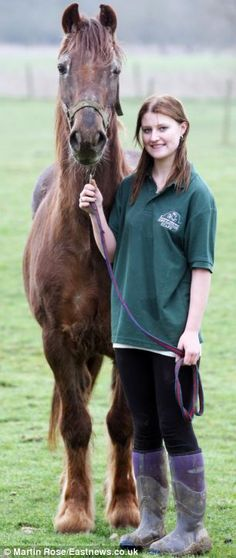 World's oldest horse trots his final furlong: Irish draught Shayne, 51, put to sleep at Essex sanctuary after reaching 120 in human years