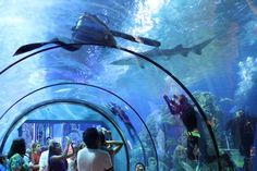 Moody Gardens Galveston Texas | Amusement Theme Parks | Houston Attractions | Family & Group Vacation Idea TX