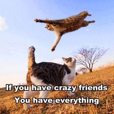 Crazy friends...