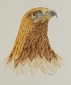 Title: Portrait Of A Golden Eagle Artist: Katharine Green Medium: Painting - Watercolour