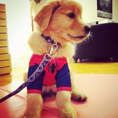 With great cuteness comes great responsibility  . Only a few days left to enter our #FaBOOlousHalloweenContest! Loving all the entries so far! Keep them coming!  by livingthatgoldenlife