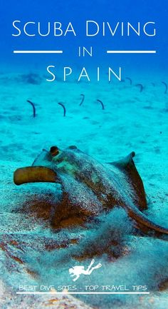 Discover the best dive sites and the top travel tips to go diving in Spain for your next scuba diving trip #scubadiving #travel #scuba #dive #diving #best #travel #Spain #CostaBrava #CanaryIslands #Tenerife