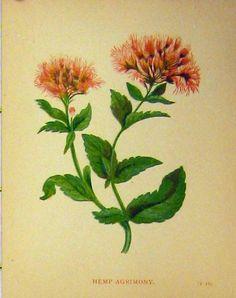 old-antique-victorian-print-B3151860184.jpg (850×1075)