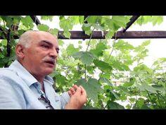Uvas, aula completa com Sergio Semerdjian em Ferraz parte 1 - YouTube