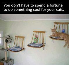 Diy Cat Shelves, Diy Cat Tree, Cat Towers, Cat Hammock, Cat Playground, Playground Ideas, Photo Chat, Cat Enclosure, Cat Condo