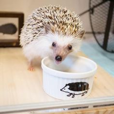 Bookish Hedgehogs Of Instagram Hedgehogs Animal And Adorable - This instagram account will satisfy your addiction for adorable hedgehogs
