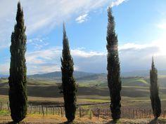 The beautiful view from the Castello de Trebbio in Tuscany. #nature #Toscana #beauty