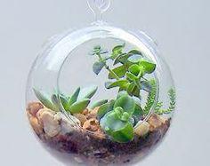 goldfish bowls as hanging gardens
