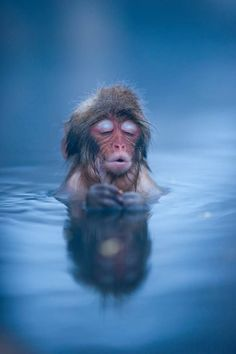 monkey relaxing in a hot spring in japan