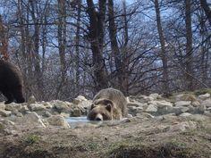 Husky, Bears, Brown, Dogs, Animals, Beautiful, Black Bear, Polar Bear, Animales
