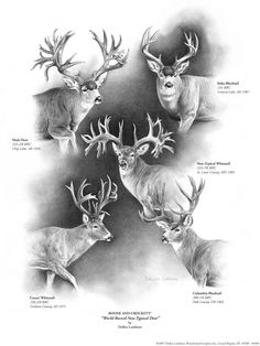 Boone & Crockett - World Record Non-Typical #Deer by Dallen Lambson #wildlife #art