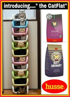 Cats and cat food