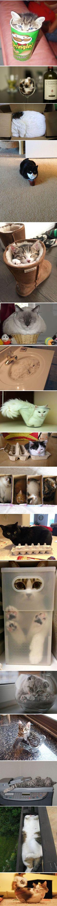 Katzen die überall reinpassen