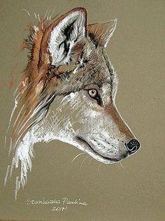 Wolf by Paulina Stasikowska