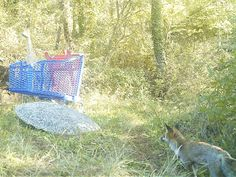 Wild Wood en Provence: fox cat dogs pinemarten and birds