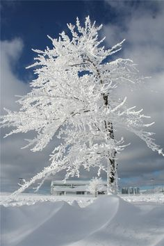 Super Hoarfrost on the mountain, accuweather.com