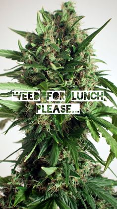 Hello It's hard to be when you're What do you visit in ? Cannabis, Weed Pictures, Weed Strains, Hello Friday, Spain, Humor, Plants, Ganja, Humour