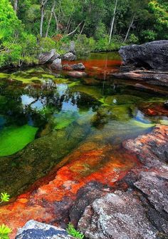 "Caño Cristales/""The River of Five Colors""/""The Liquid Rainbow""– Serrenia de la Macarena in the Meta region of Columbia. At the end of July - November is colored in gaudy colors, including yellow, green, blue, black, and especially red"