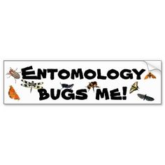 Entomology Bugs Me Pun