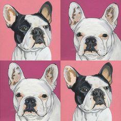French Bulldog , Frenchie