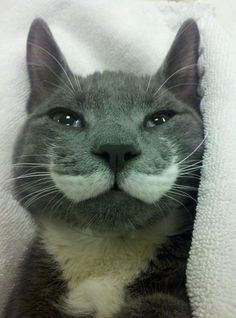 Aww this kitty has a mustache!!
