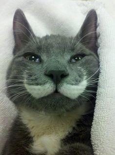 Mustache cat.