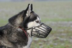 Let's Talk: Dog Muzzles Aren't Just for Aggression - Top Dog Tips #DogMuzzle