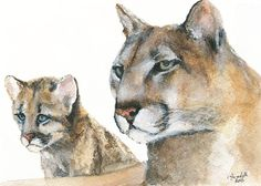 Mother Cougar & Cub 5x7 Print of Original by Ghirardelli on Etsy, $6.00