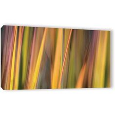 Cora Niele Vivid Grass Gallery-Wrapped Canvas, Size: 82 x 4, Green