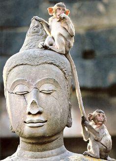 Buddha & monkeys