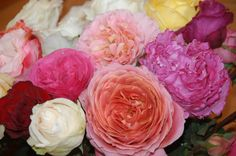 Assorted Garden Roses a great way to to learn about the varieties.Talk to your Florabundance wholesale Floral Consultant for more details.
